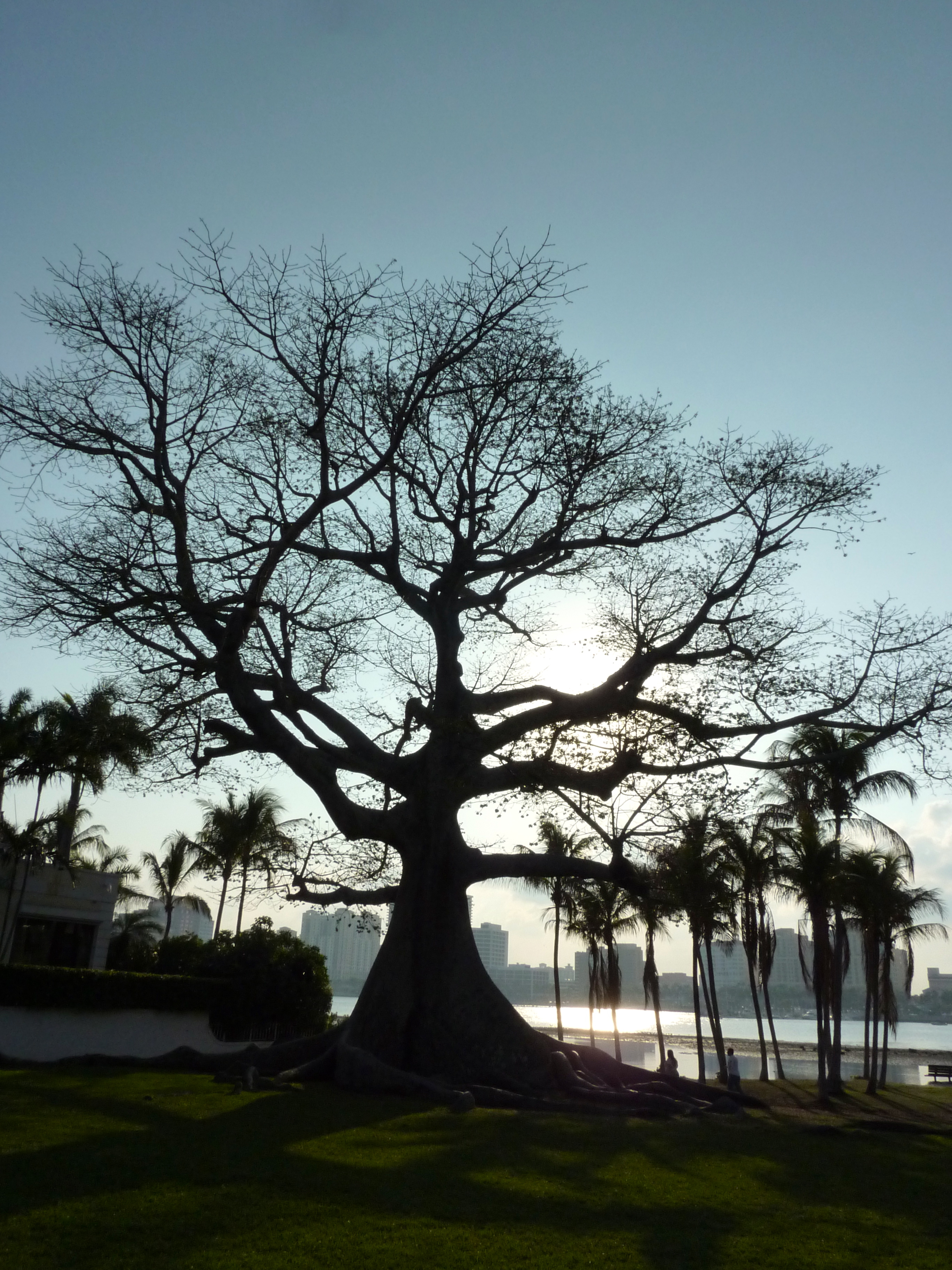 Packed Suitcase | #FriFotos: Trees