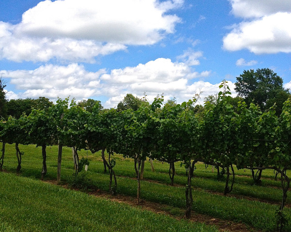 Friday- Pearmund vines