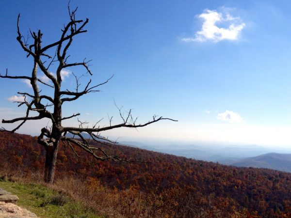 Fall in Shenandoah National Park