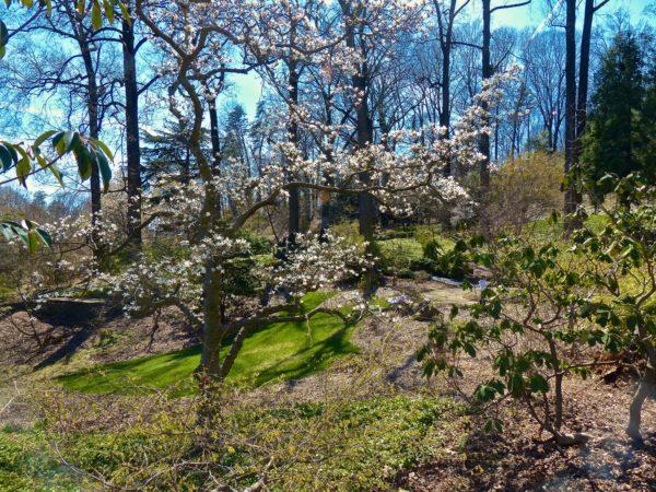National Arboretum- gardens
