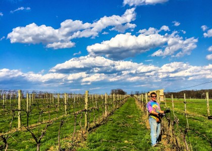 Cassel Vineyards