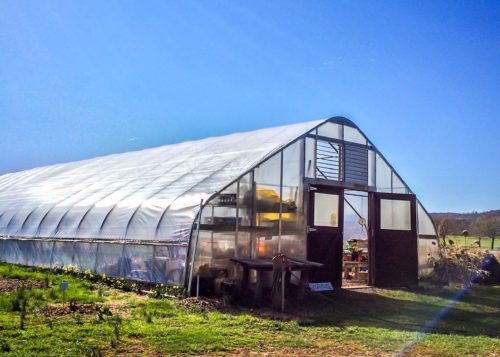Airlie- greenhouse